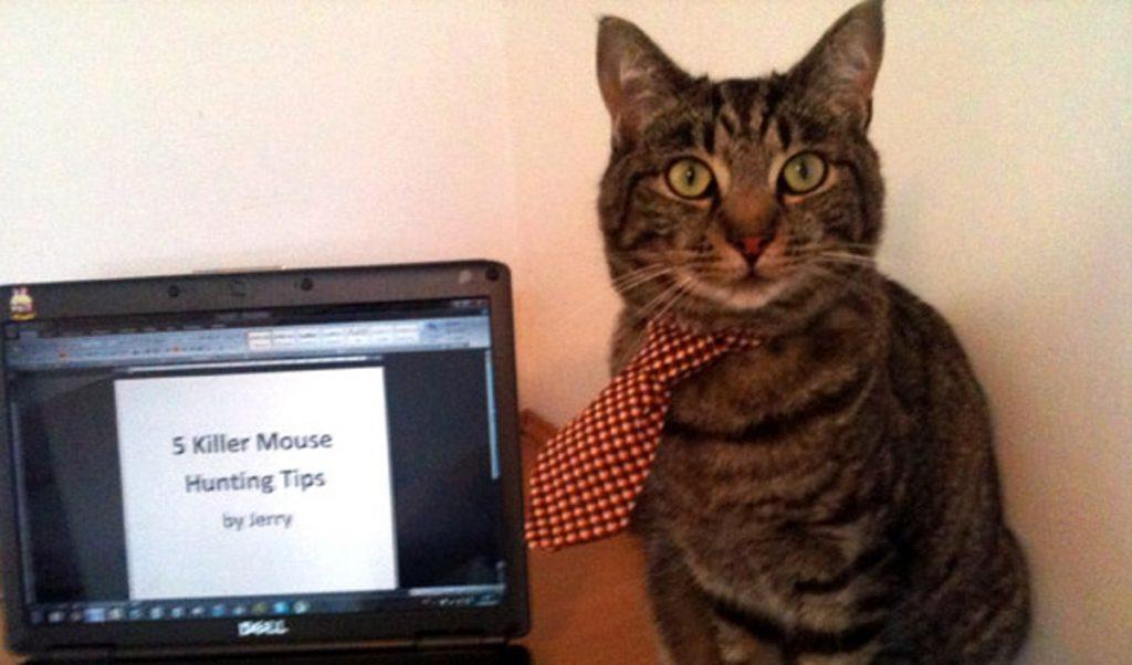 Jerry the copywriting intern cat